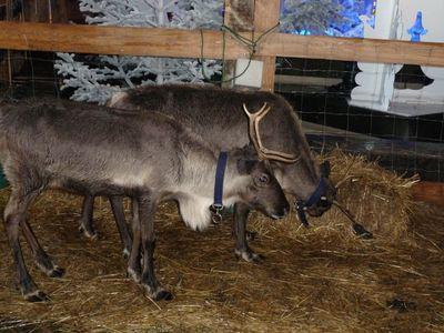Marché de Noël 2011 016
