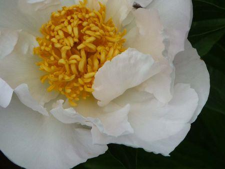 Fleurs du jardin mai 2012 003