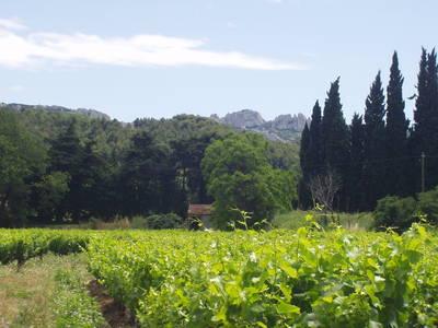 Juin-provence