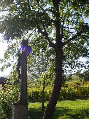 Les vignes du seigneurs Orschwihr Gueberschwihr 003