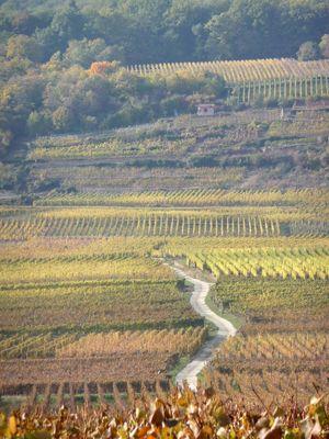 27 10 2011 route du vin 003