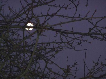 Soir de pleine lune l