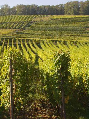 Les vignes du seigneurs Orschwihr Gueberschwihr 006 copie