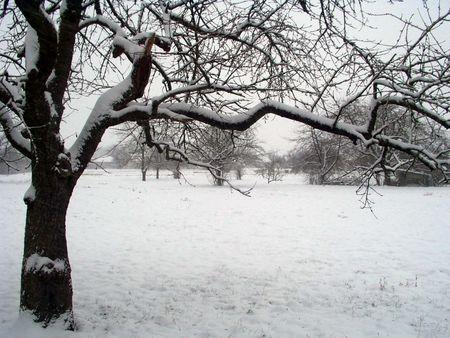 Neige au réveil
