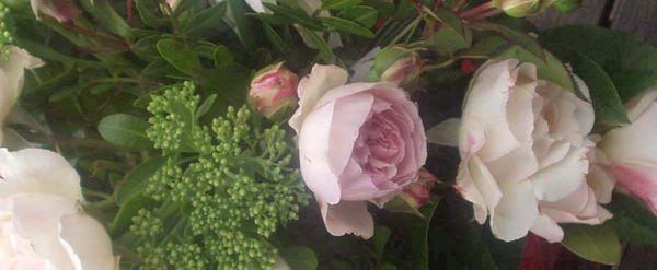 Roses 004 copie