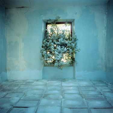 Faucon chambre d'amour bleue47592951_p
