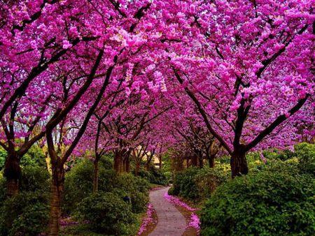 La beauté du monde3117598493_1_7_wPJWOPpW