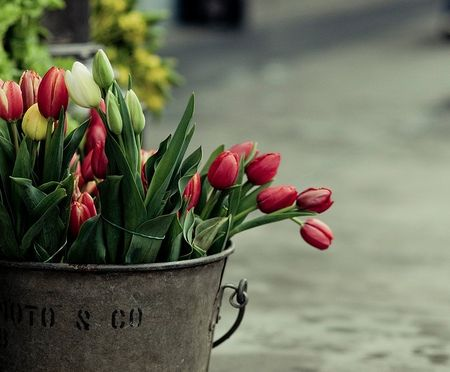 Tulipes1315a8622b594be7fd99b7ae31962252
