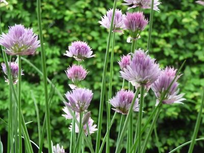 Fleurs mai2014 007